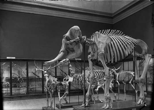 Paleo skeletons from Field Museum, Flickr, 1898
