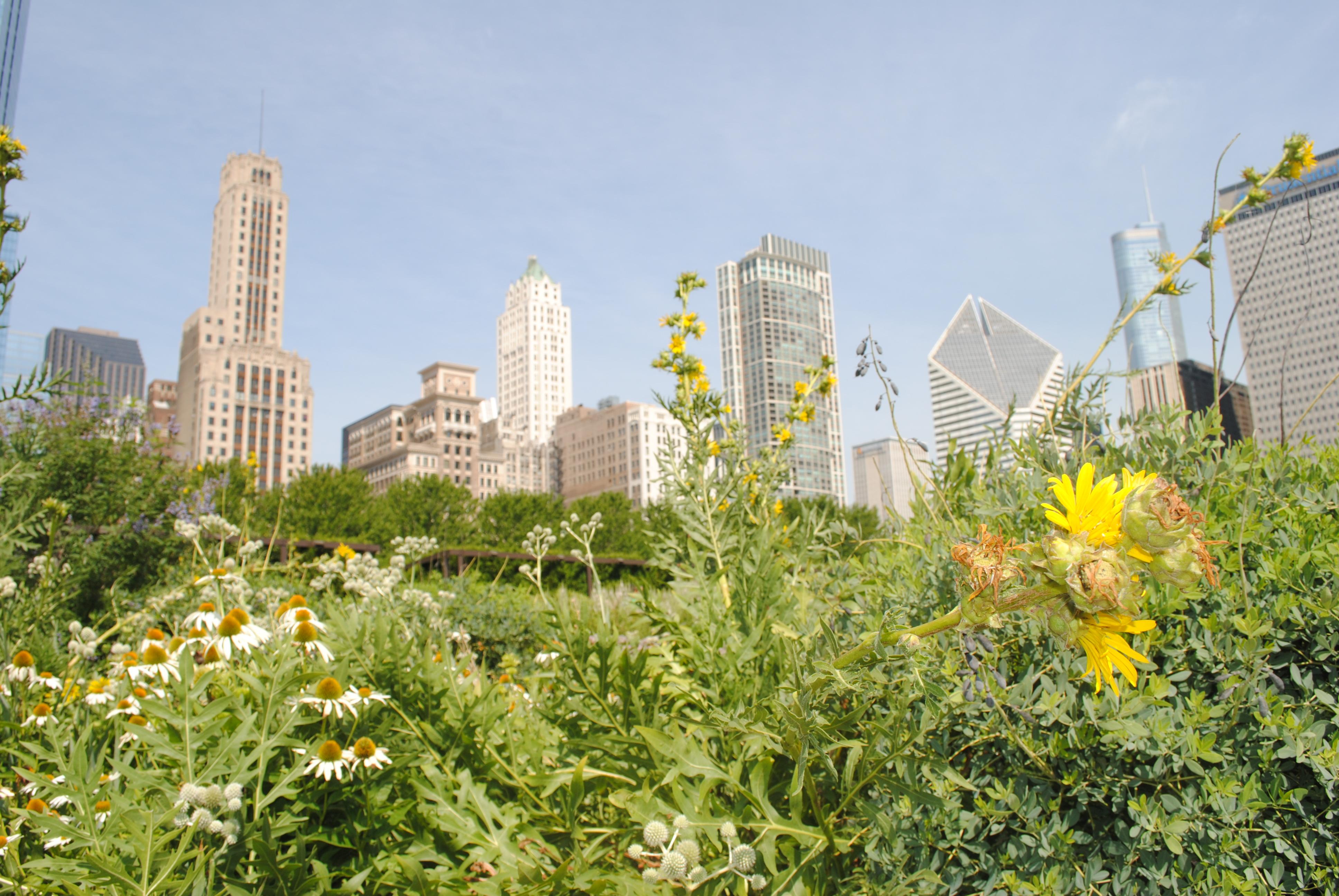 wildflowers in a city garden