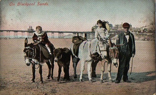 Donkey rides available in Black Pool, 1900s