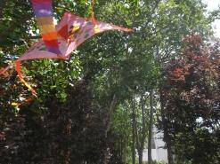 Kites decorating trees - intentional