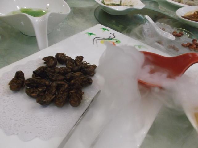 Cicadas with Dried Ice