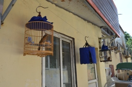 Bird cages, Muslim District, Jinan