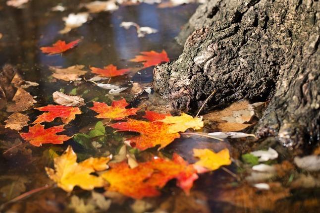 autumn-2900166_1280