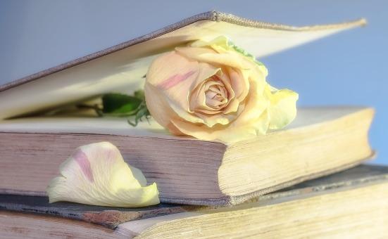 rose-2101475_1280