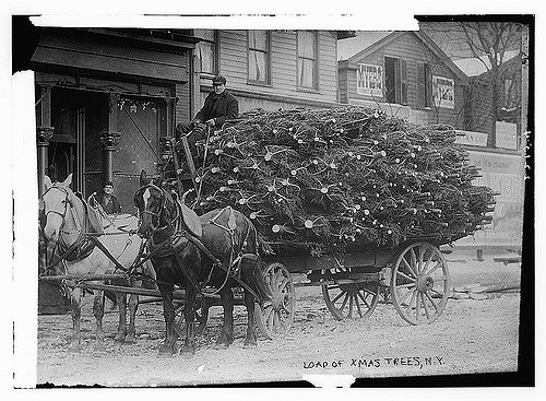 load of xmas trees 1910