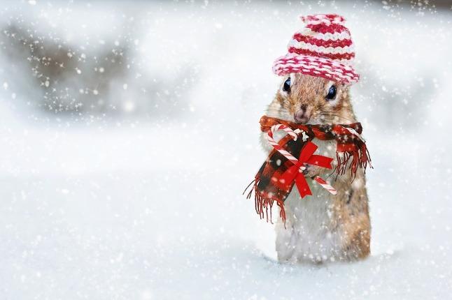winter-2926825_1280