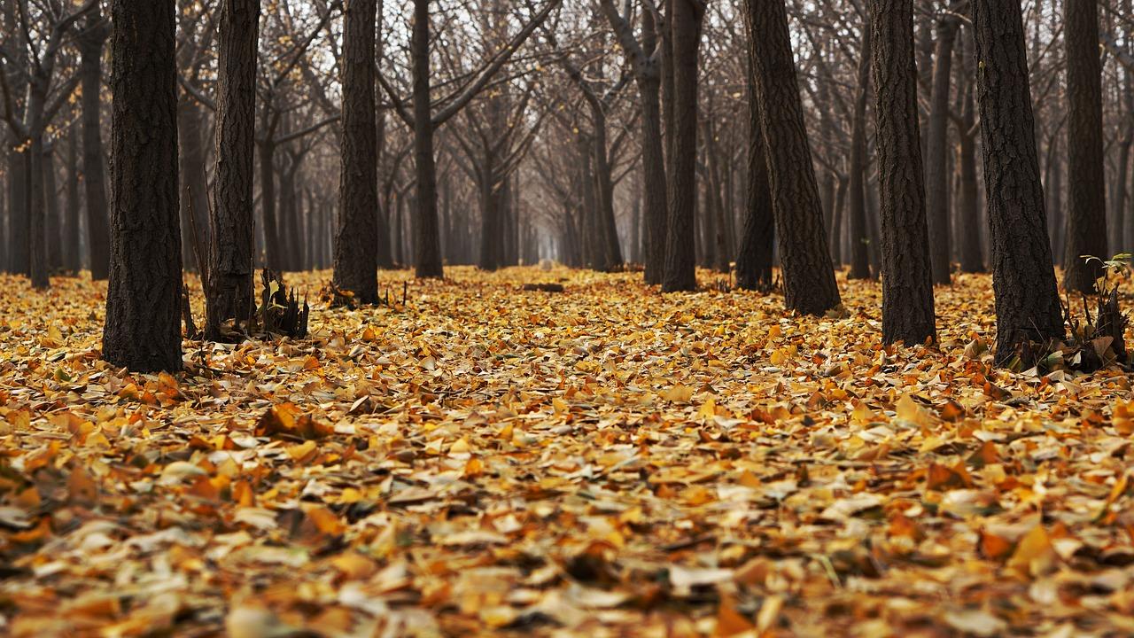 autumn-1869426_1280