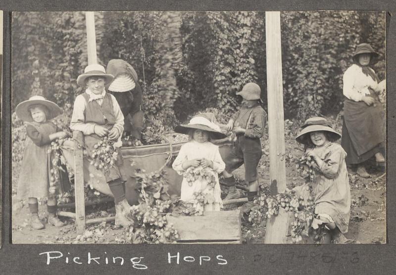 Picking hops [Tasmania]