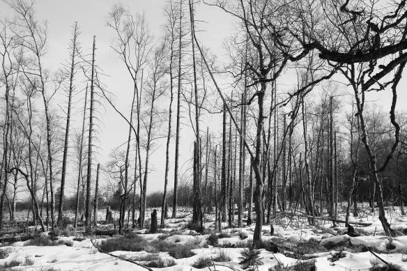 forest-666364_960_720.jpg