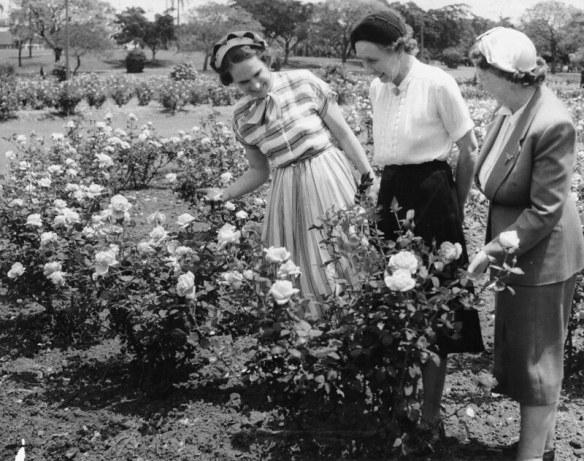 rose garden 1953