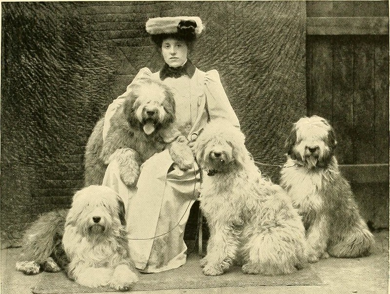 lady and dogsc