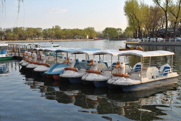 Hou Hai duck boats