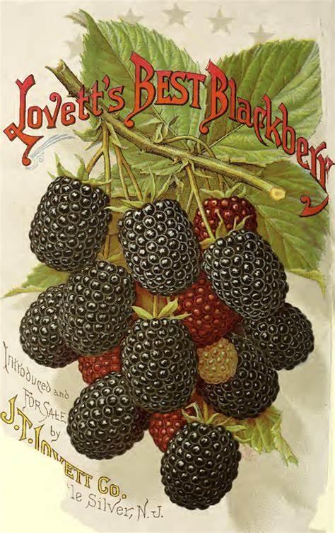 berry seeds