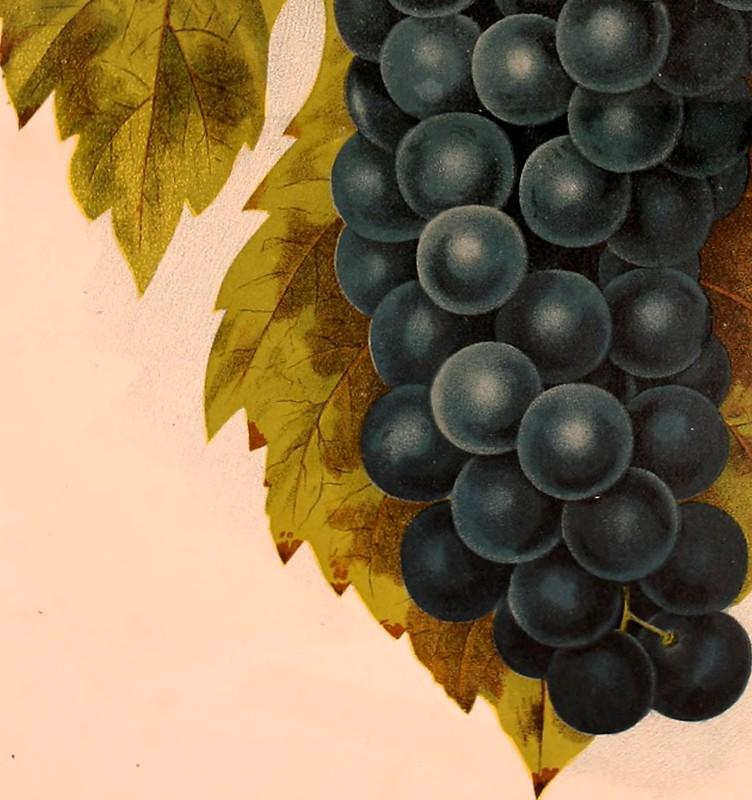 descriptive catalog fruits 1888
