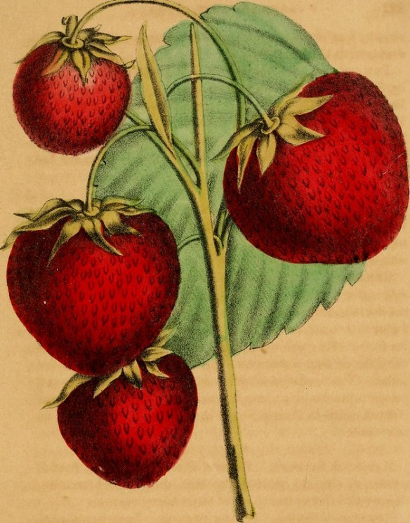 strawberriesc