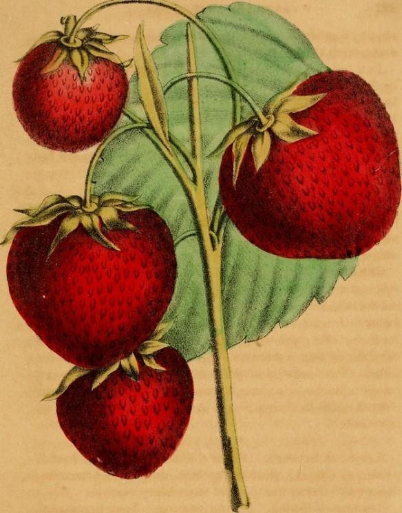 strawberriesc